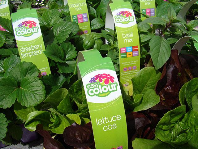 easy-colour-herbs-vegetables