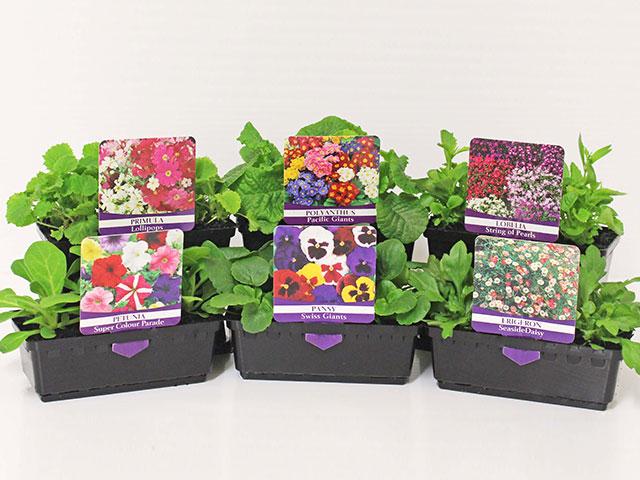 easy-colour-punnet-flowers3