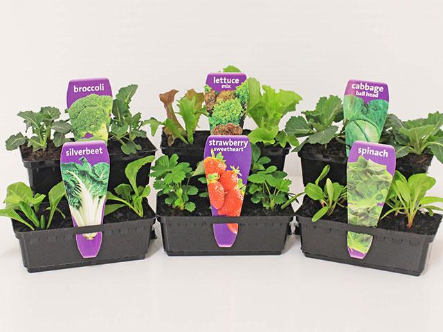 easy-colour-punnet-vegetables3
