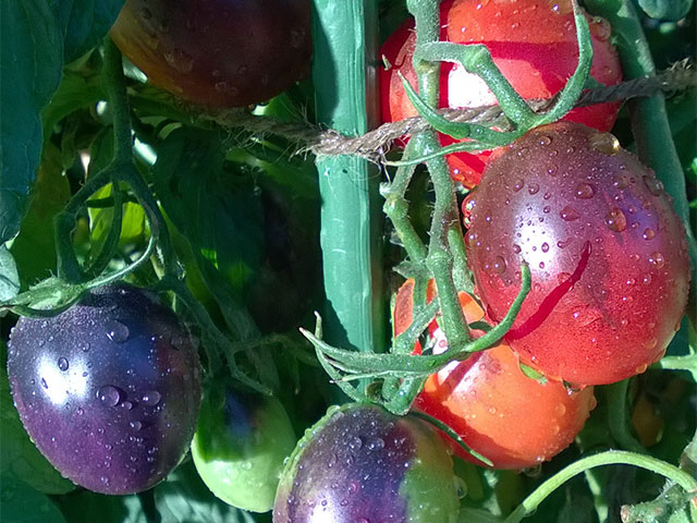 easy-colour-grafted-vegetables